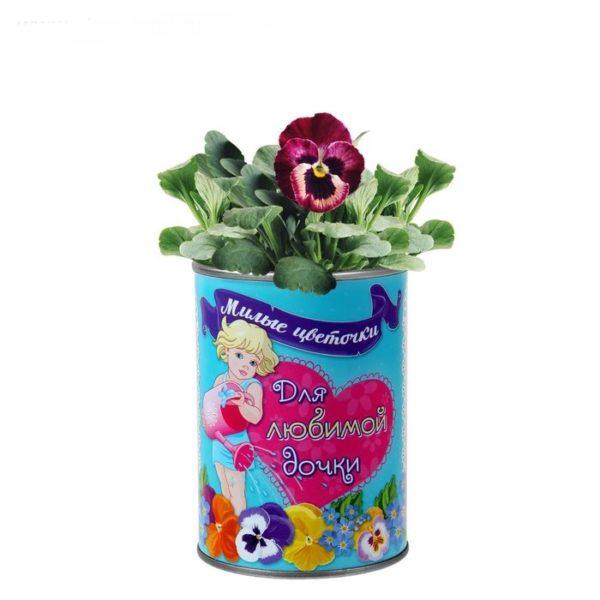 """Растущие цветы в банке """"Для любимой дочки"""""""