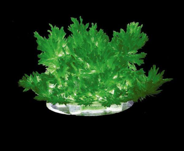 Набор для выращивания кристалла